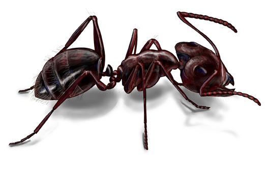 Ant Extermination - pest control